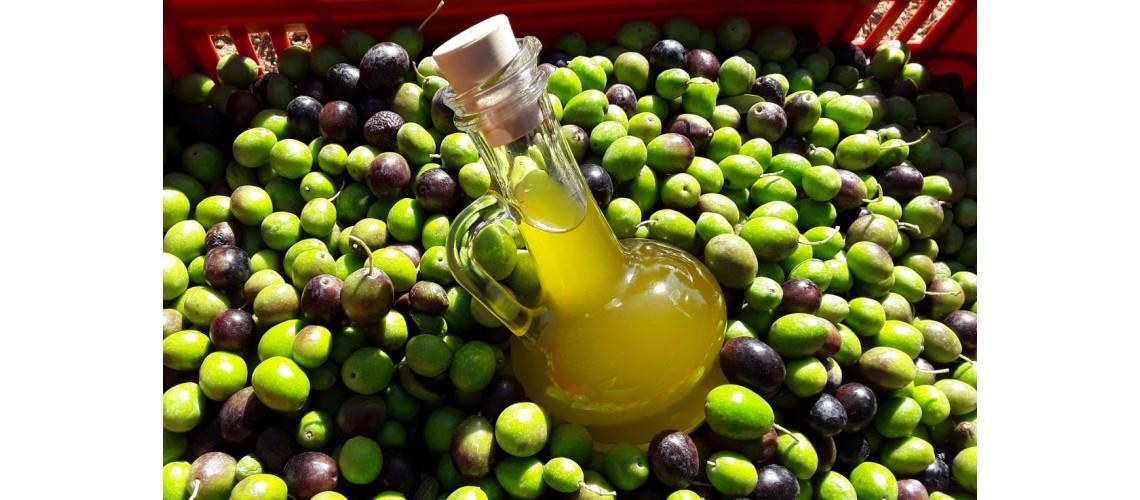 Il nostro olio